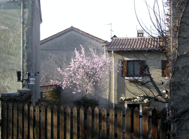File draga sant 39 elia case rustiche e un pesco in fiore for Case rustiche