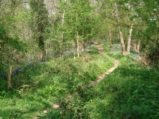 Footpath up Marian's Hill - geograph.org.uk - 467428