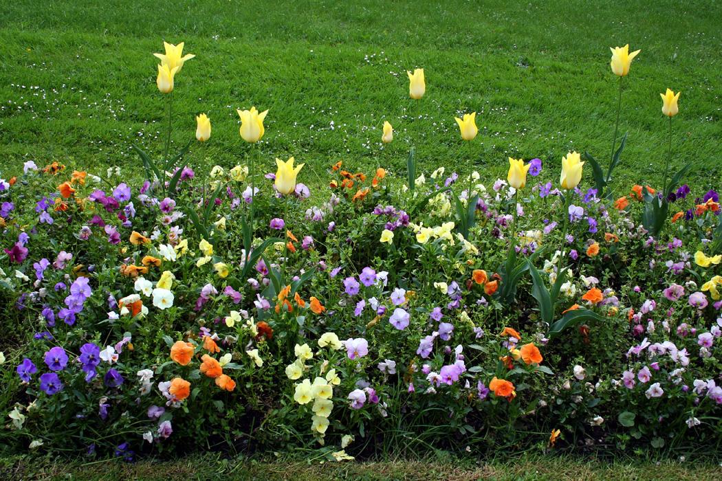 Fichier jardin massey tarbes wikip dia for Entretien jardin tarbes