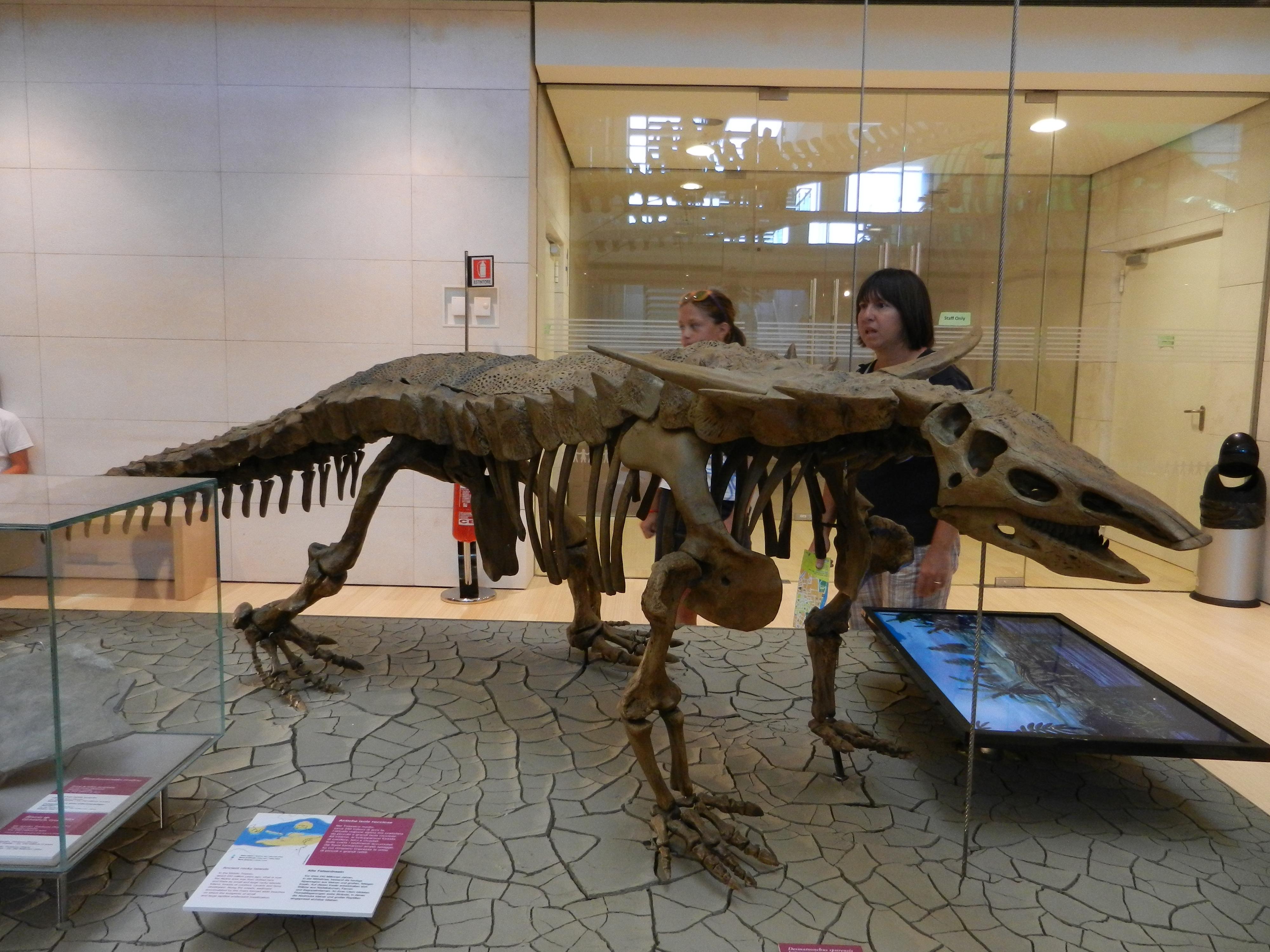 Desmatosuchus | Prehistoric Kingdom Wiki | FANDOM powered ...