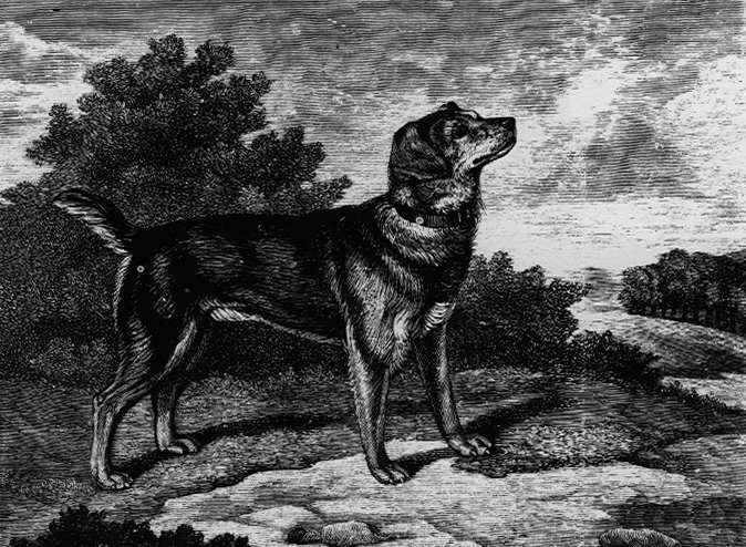 Old English Black And Tan Terrier Wikipedia