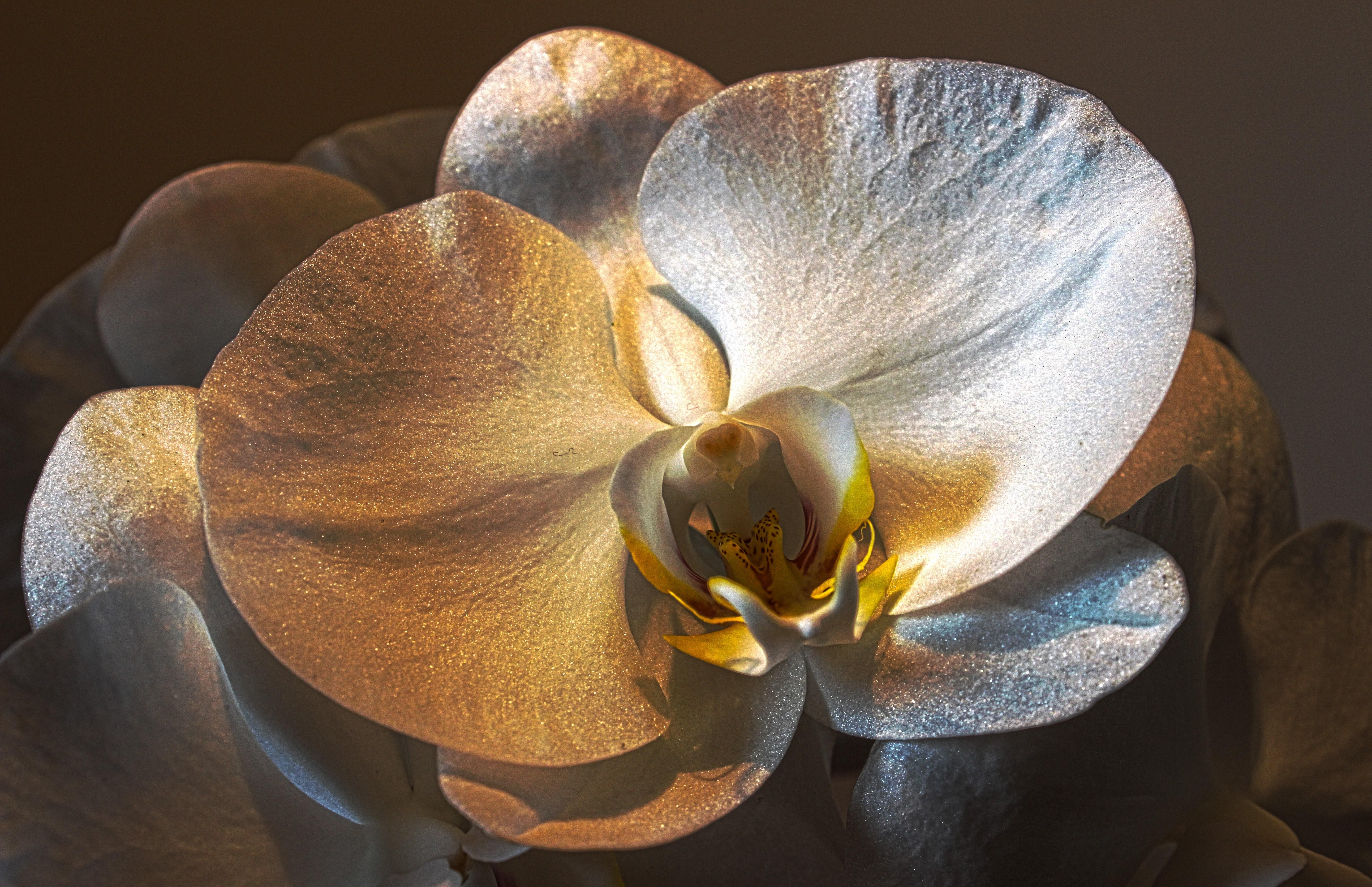 file orchidee. Black Bedroom Furniture Sets. Home Design Ideas