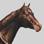 Paard01.jpg