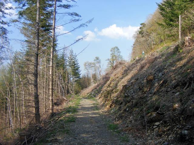 Path through Gwydyr Forest - geograph.org.uk - 1375187