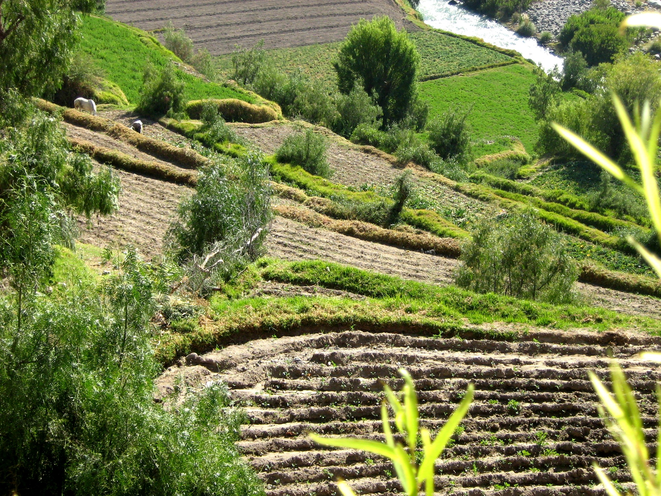 File peru terrace farming jpg wikimedia commons for Terrace cultivation