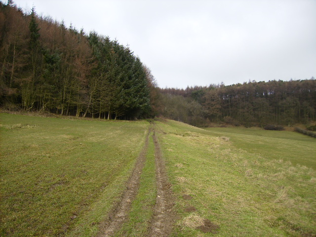 Public access route up into Broxa Forest - geograph.org.uk - 337431