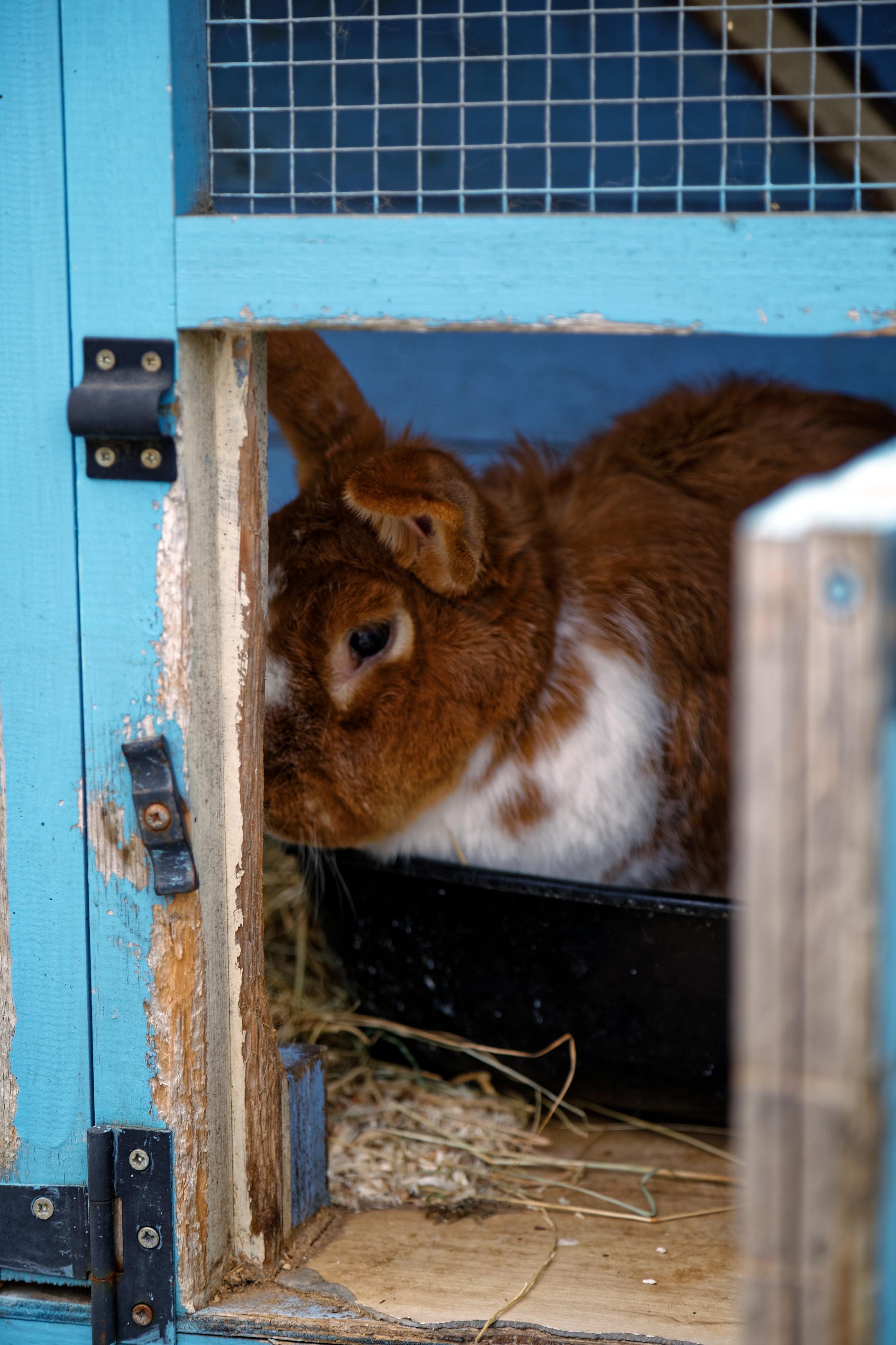File Rabbit Hutch At Boreham Es England 2 Jpg