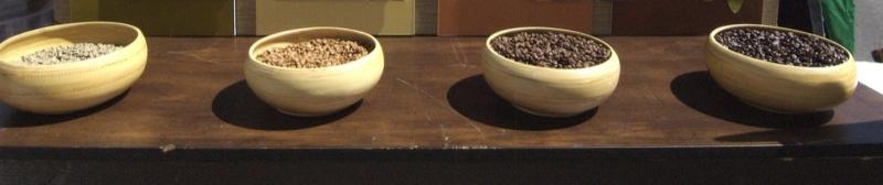 Starbucks coffee beans