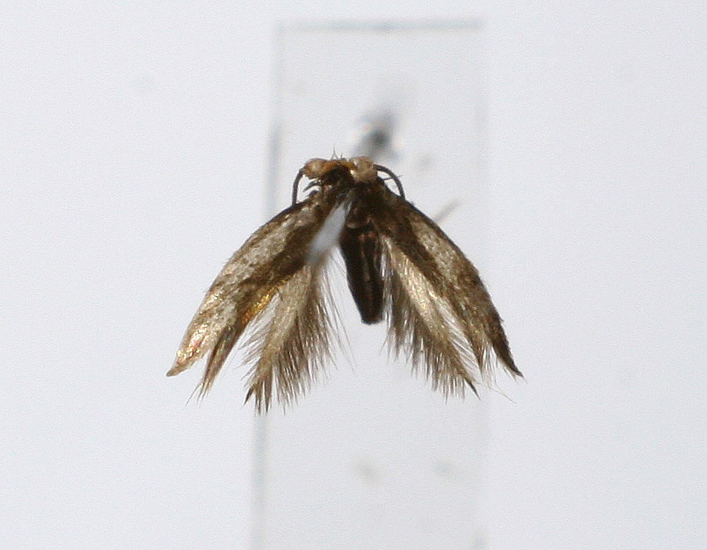 order lepidoptera a class of insects Class insecta of phylum arthropoda has undergone and continues to undergo changes in its classification here is an alphabetical list of insect orders in current usage with examples of insects types: 1.