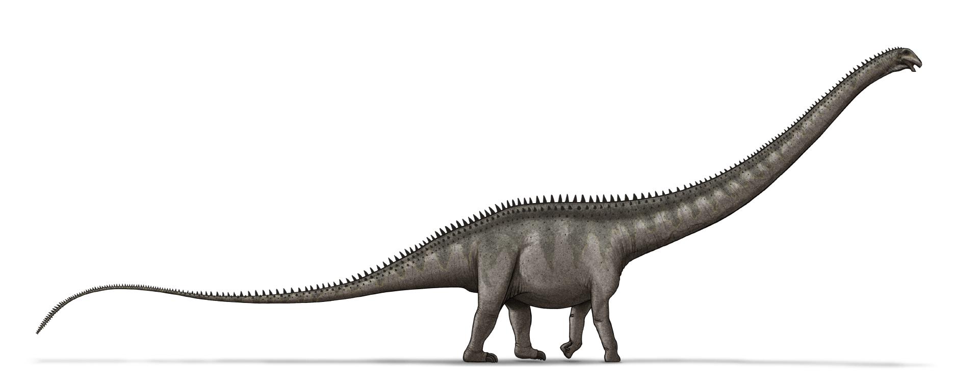 Die größten Sauropoden Supersaurus_dinosaur