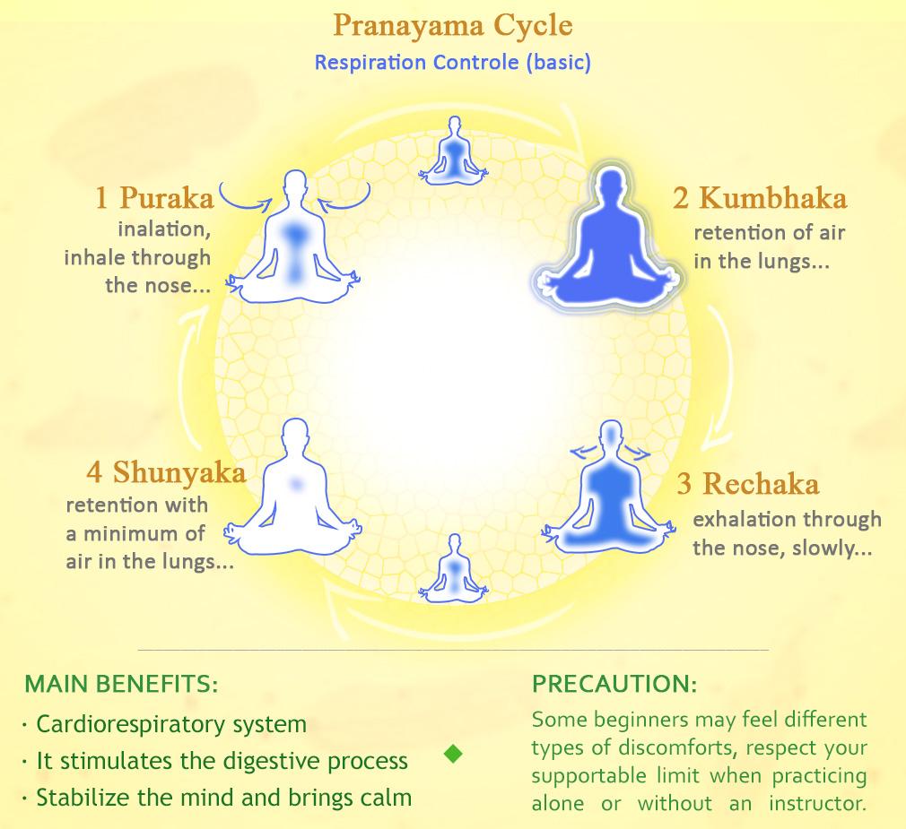 The Basic of Pranayama Cycle.jpg