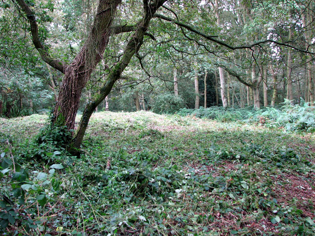 The site of St William's chapel in Mousehold Heath (geograph 2062004)