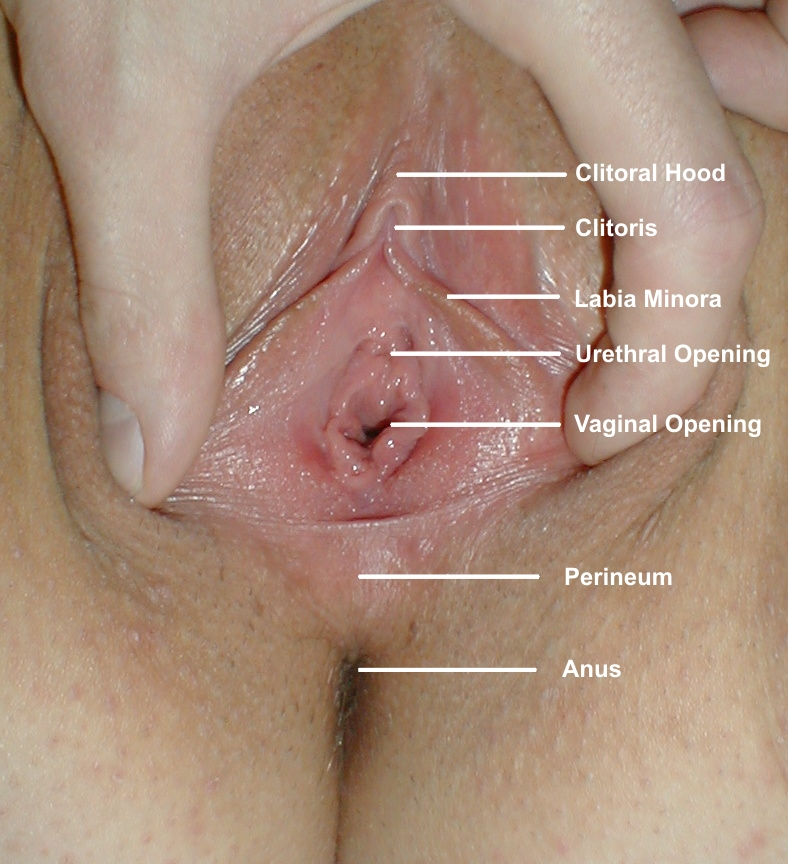 An average vaginal opening size