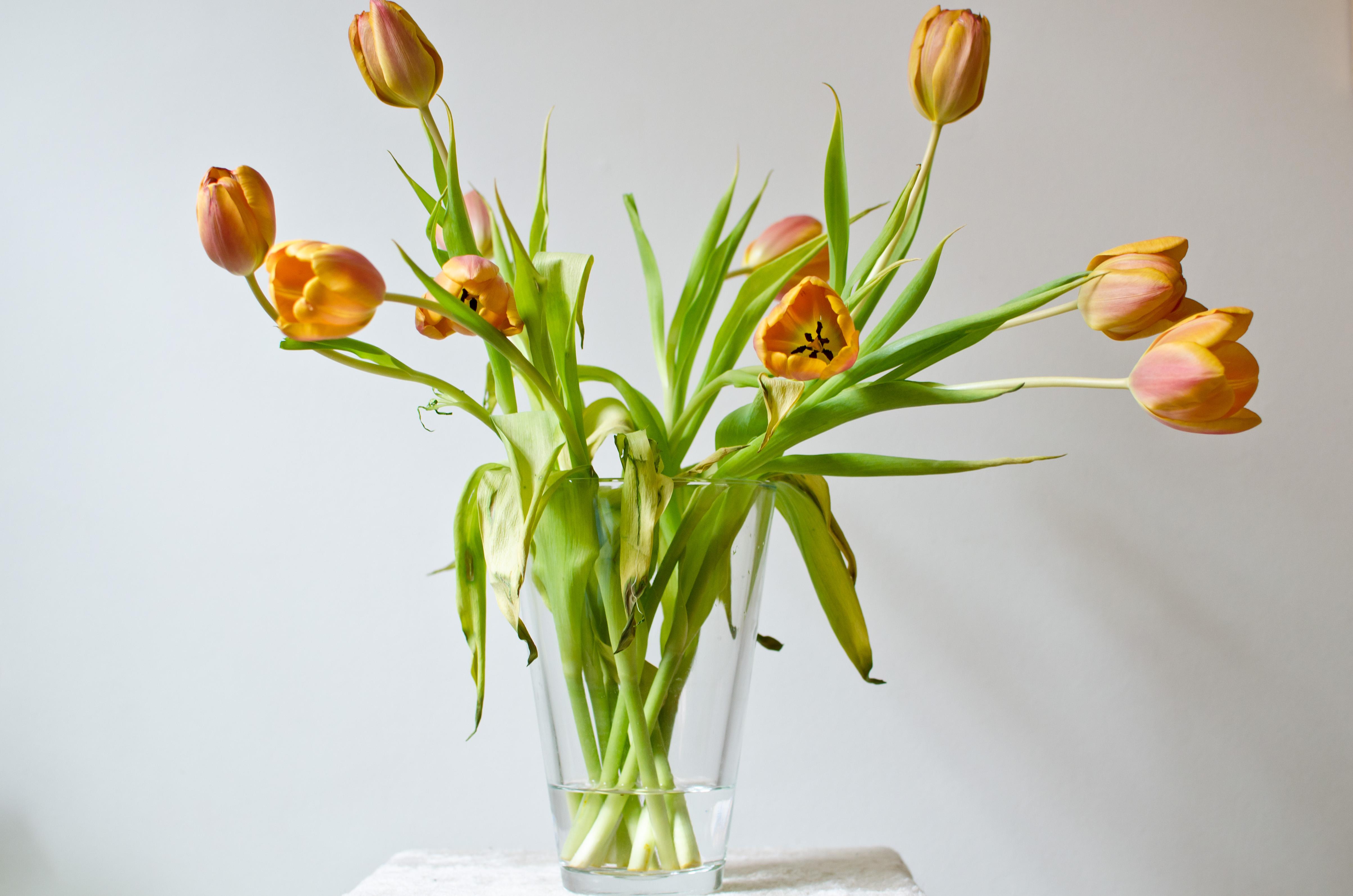 Filevase of tulipsg wikimedia commons filevase of tulipsg floridaeventfo Gallery
