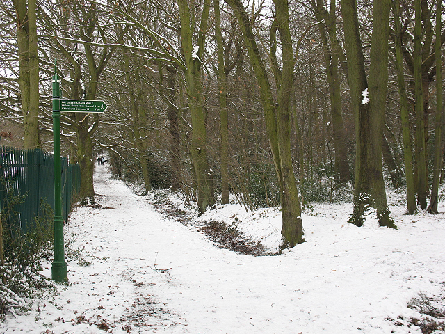 Winter in Elmstead Woods (2) - geograph.org.uk - 1655287
