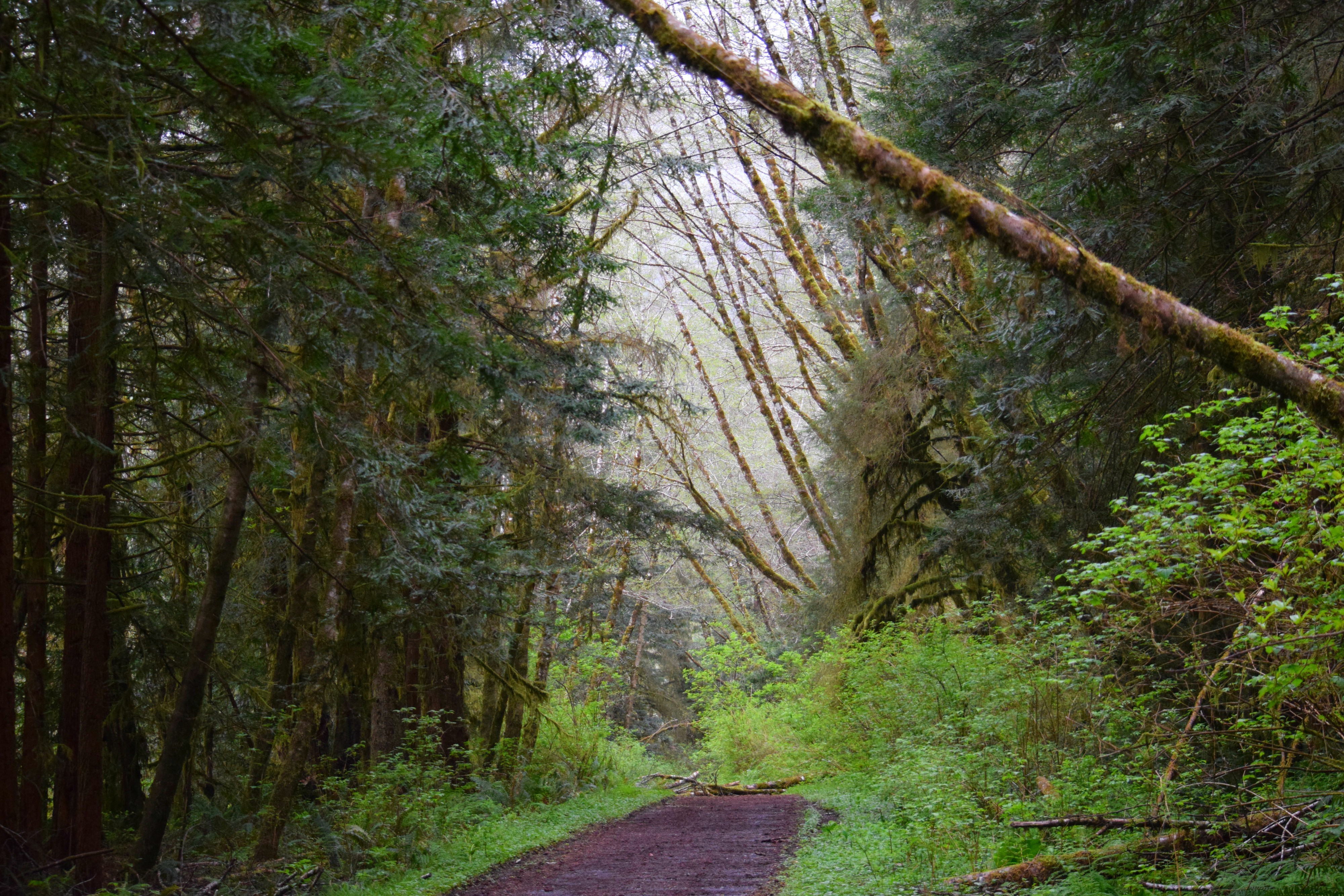 A walk in Humboldt County - panoramio.jpg