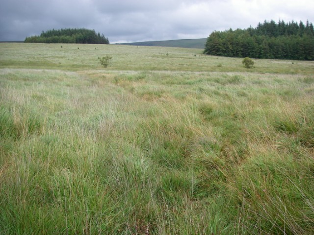 Across the moor to Coed Taf Fawr - geograph.org.uk - 911589
