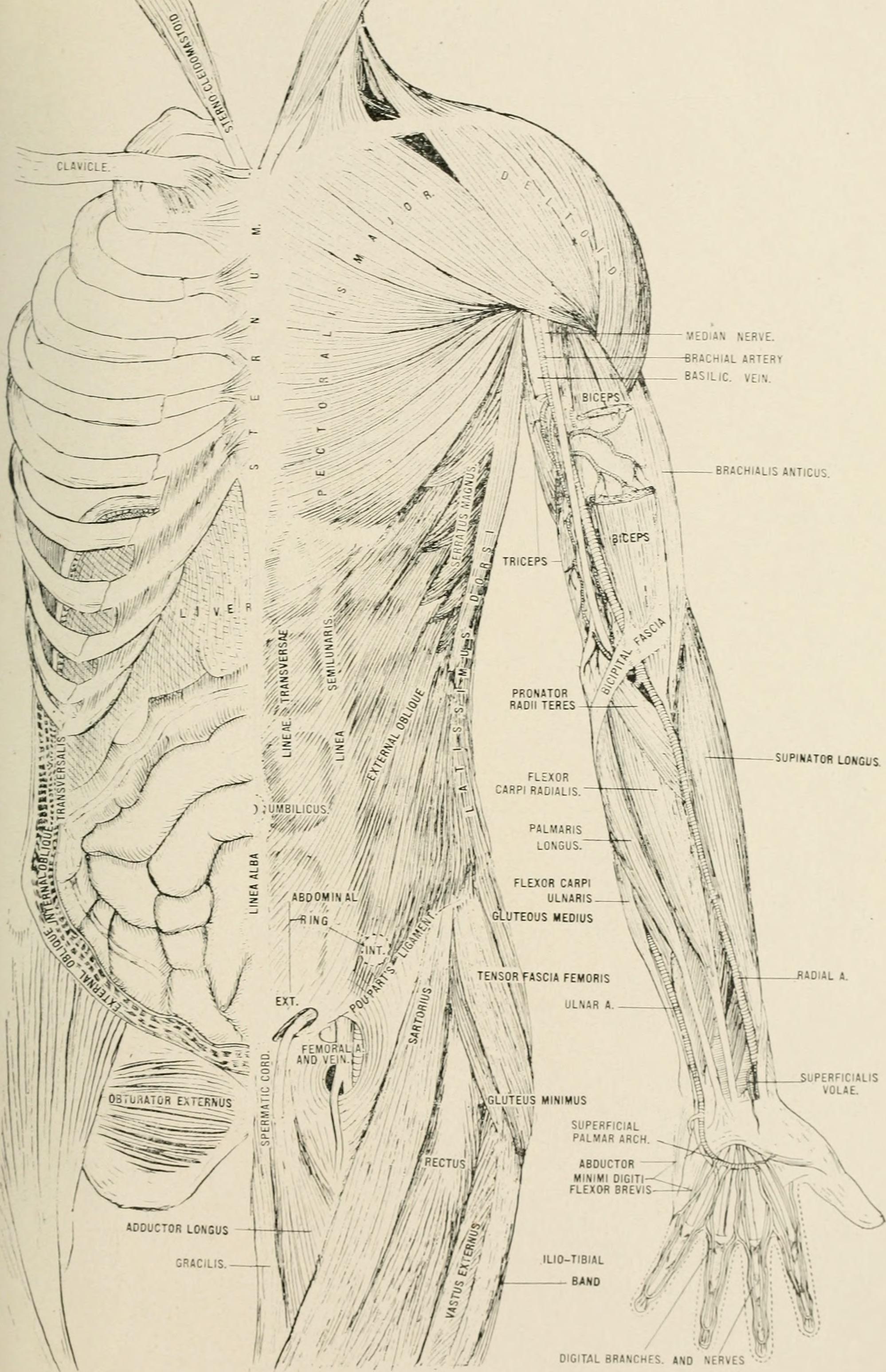 Nett Grau Anatomie Untertitel Galerie - Menschliche Anatomie Bilder ...