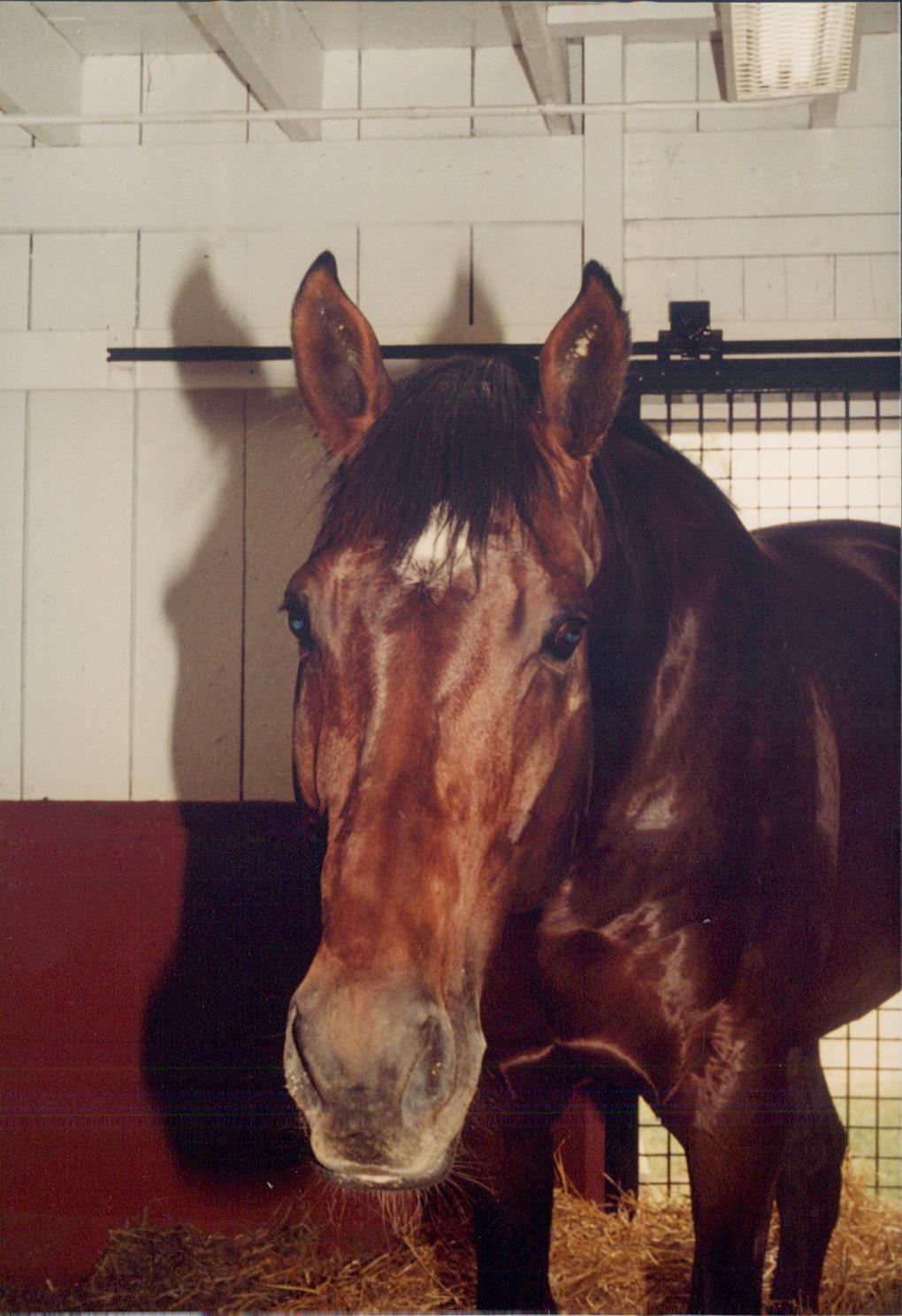 Apalachee Horse Wikipedia