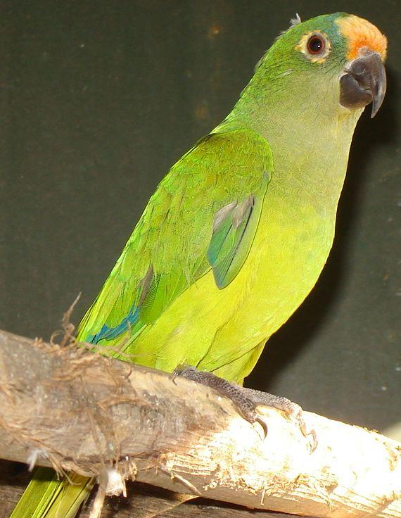 Clavaria - Wikipedia