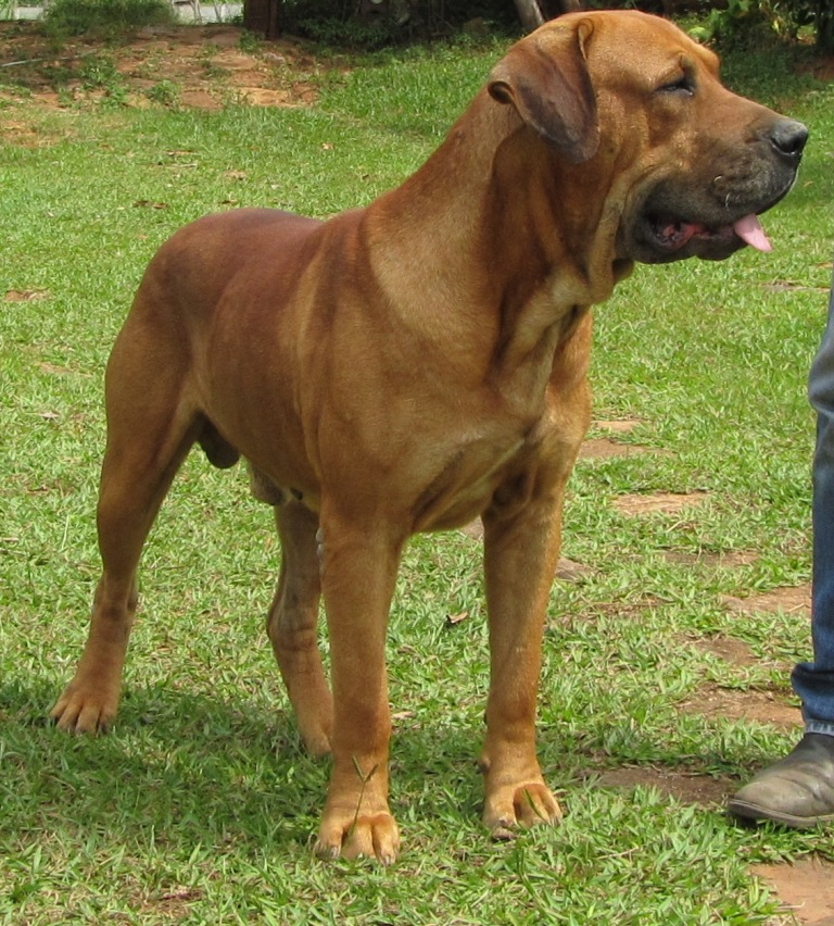 Royal Canin Medium Light Dry Dog Food Site Ebay Co Uk