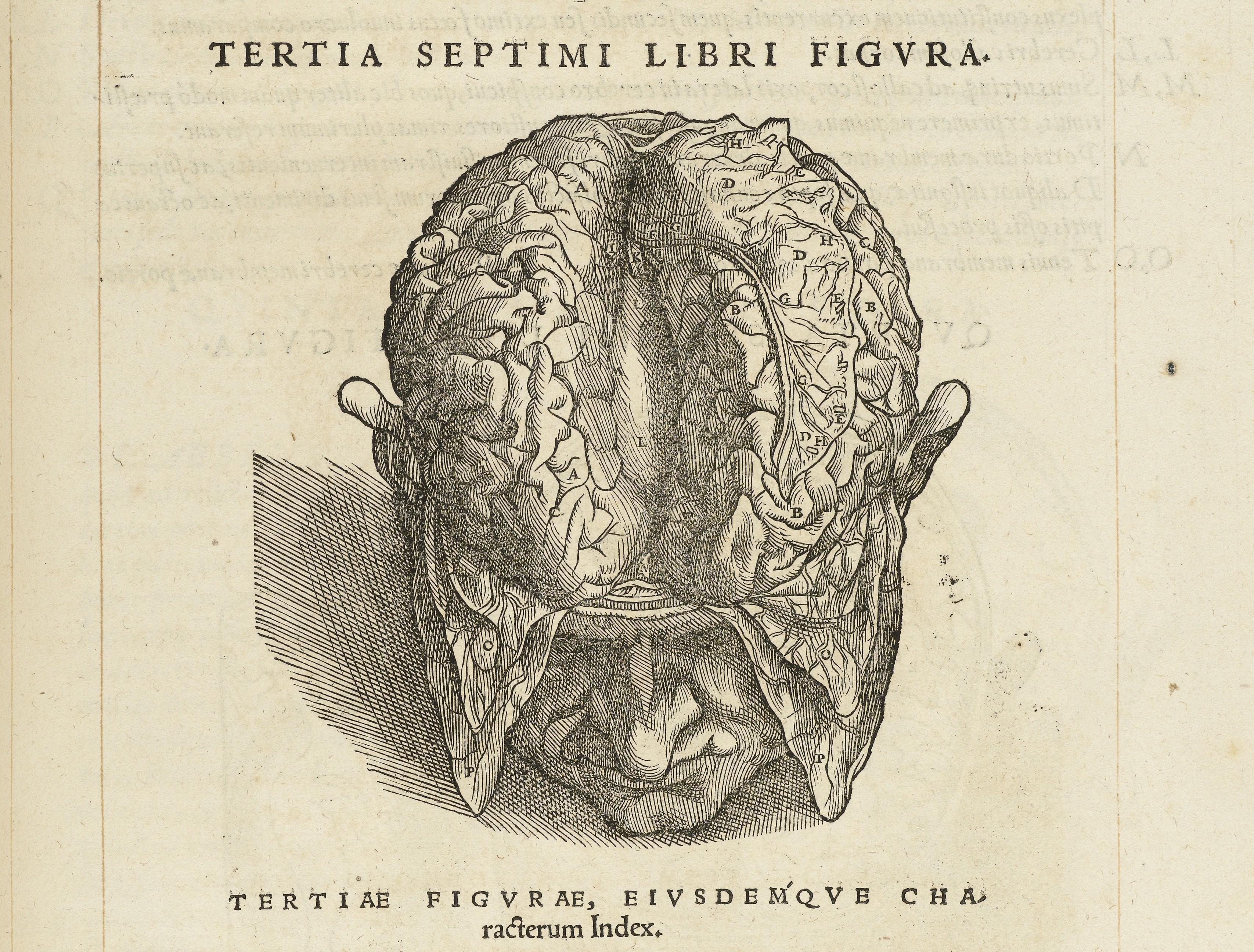Resultado de imagen de de humanis corporis fabrica libri septem