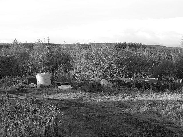 File:Edge of the Big Wood - geograph.org.uk - 601550.jpg