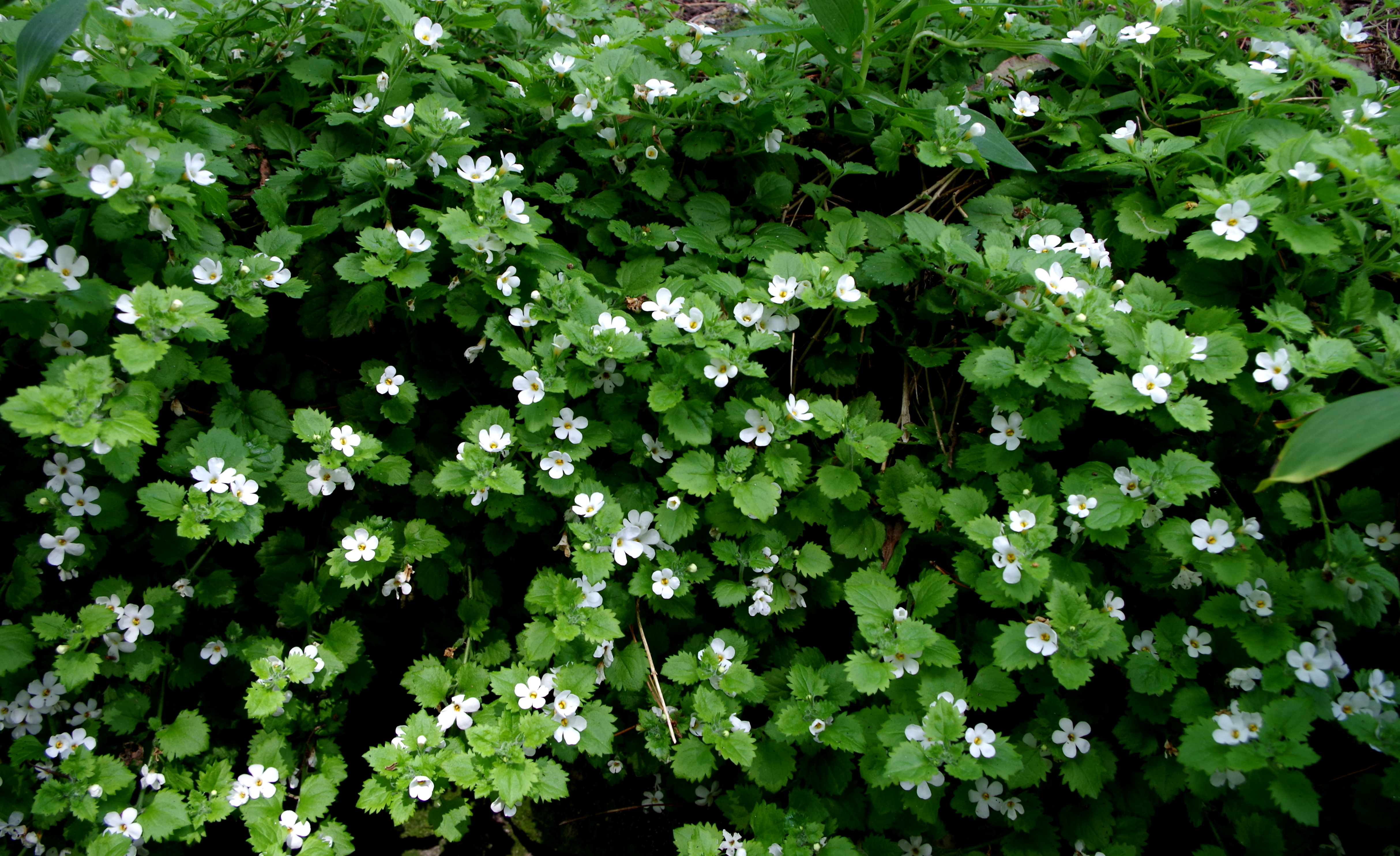 File fleurs du jardin delaselle ile de batz jpg for Fleurs du jardin