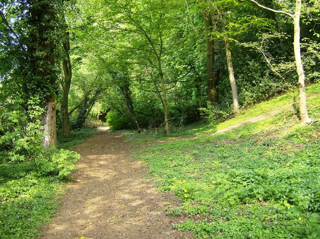 Footpath in Castle Wood - geograph.org.uk - 461572