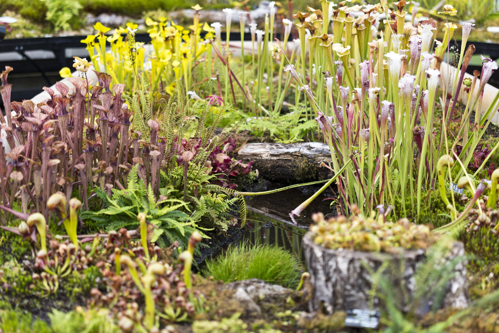 File:Glasgow Botanical Gardens (8038799221)