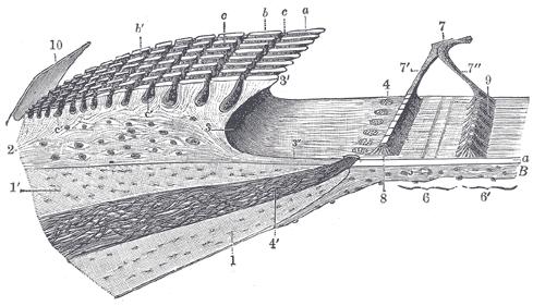 Spiral Limbus