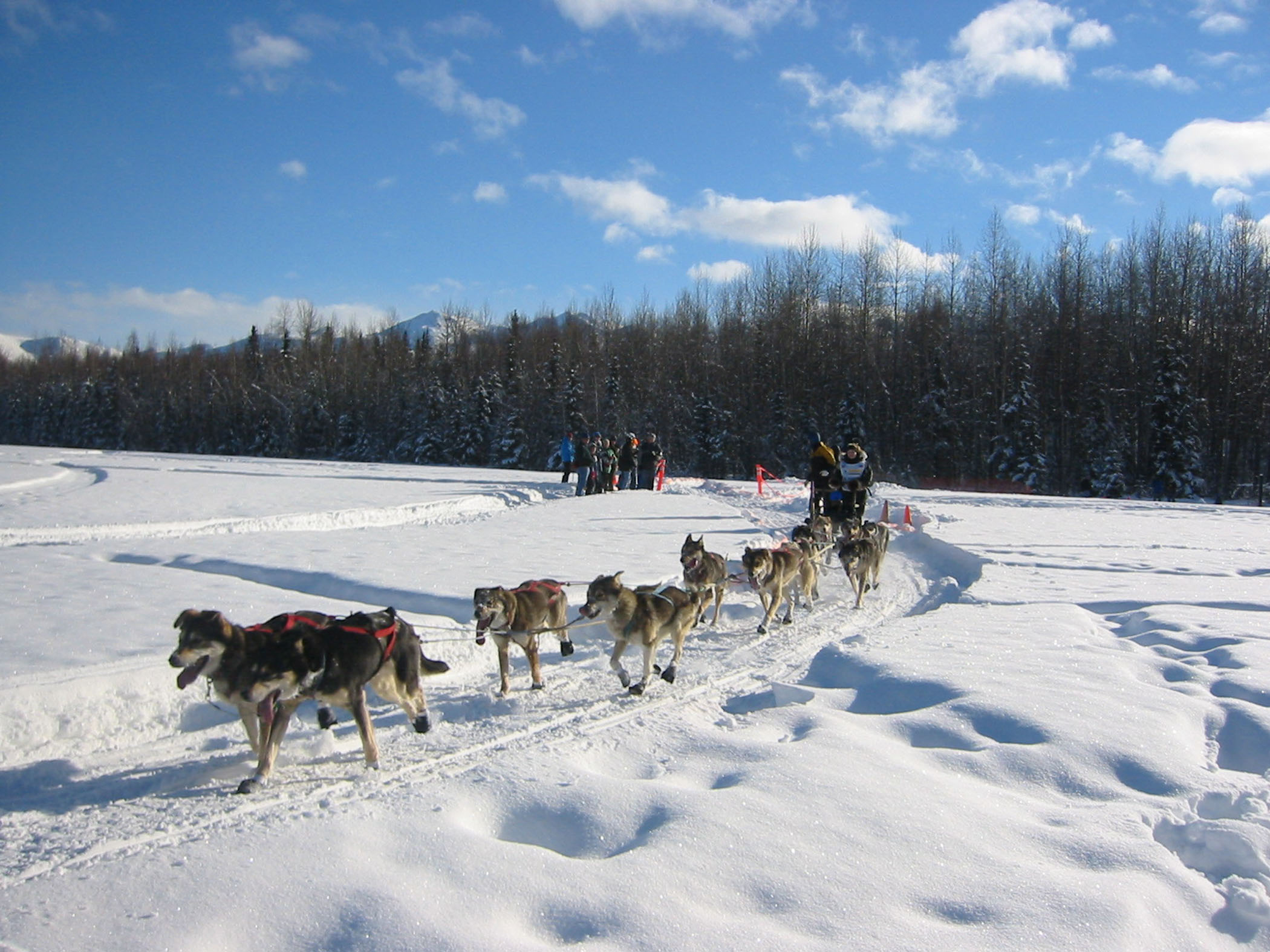 Used Dog Sleds For Sale
