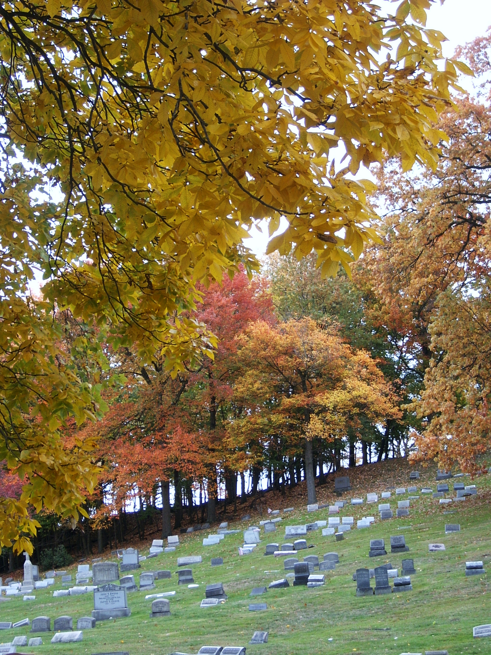 Fall Colors in Highwood Cemetery