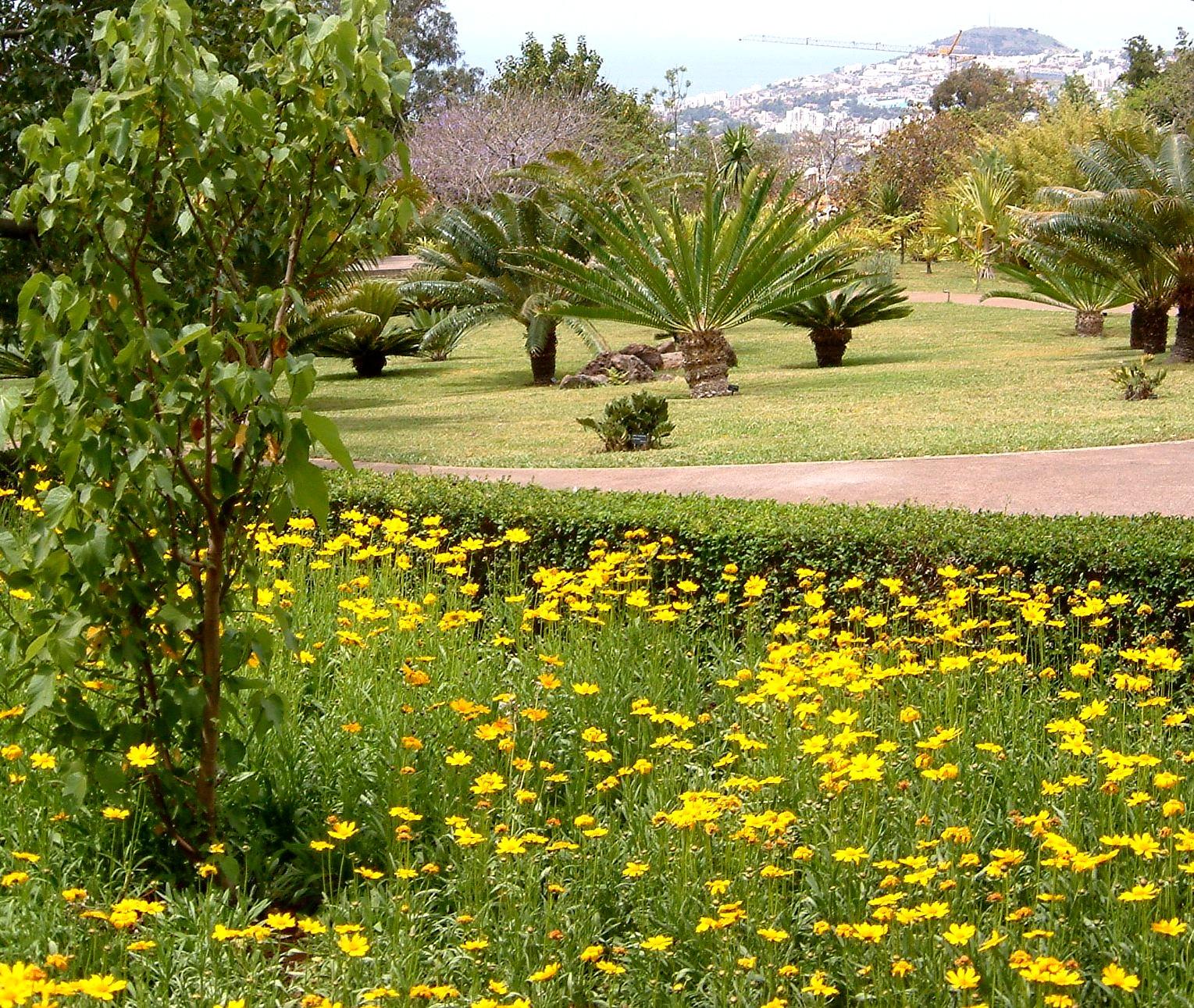 Filemadeira Oberhalb Funchal Botanischer Garten 5 07jpg