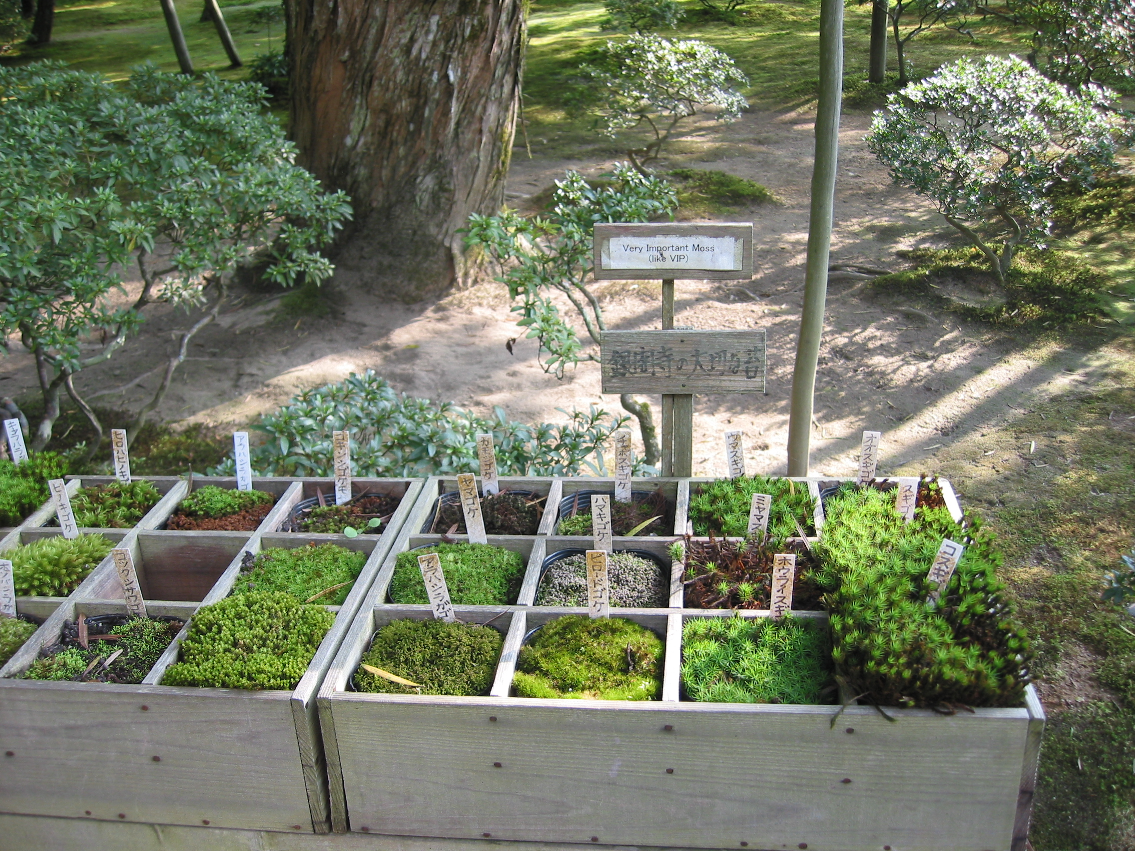 File:Moss Types At The Ginkakuji Garden, Kyoto, Japan