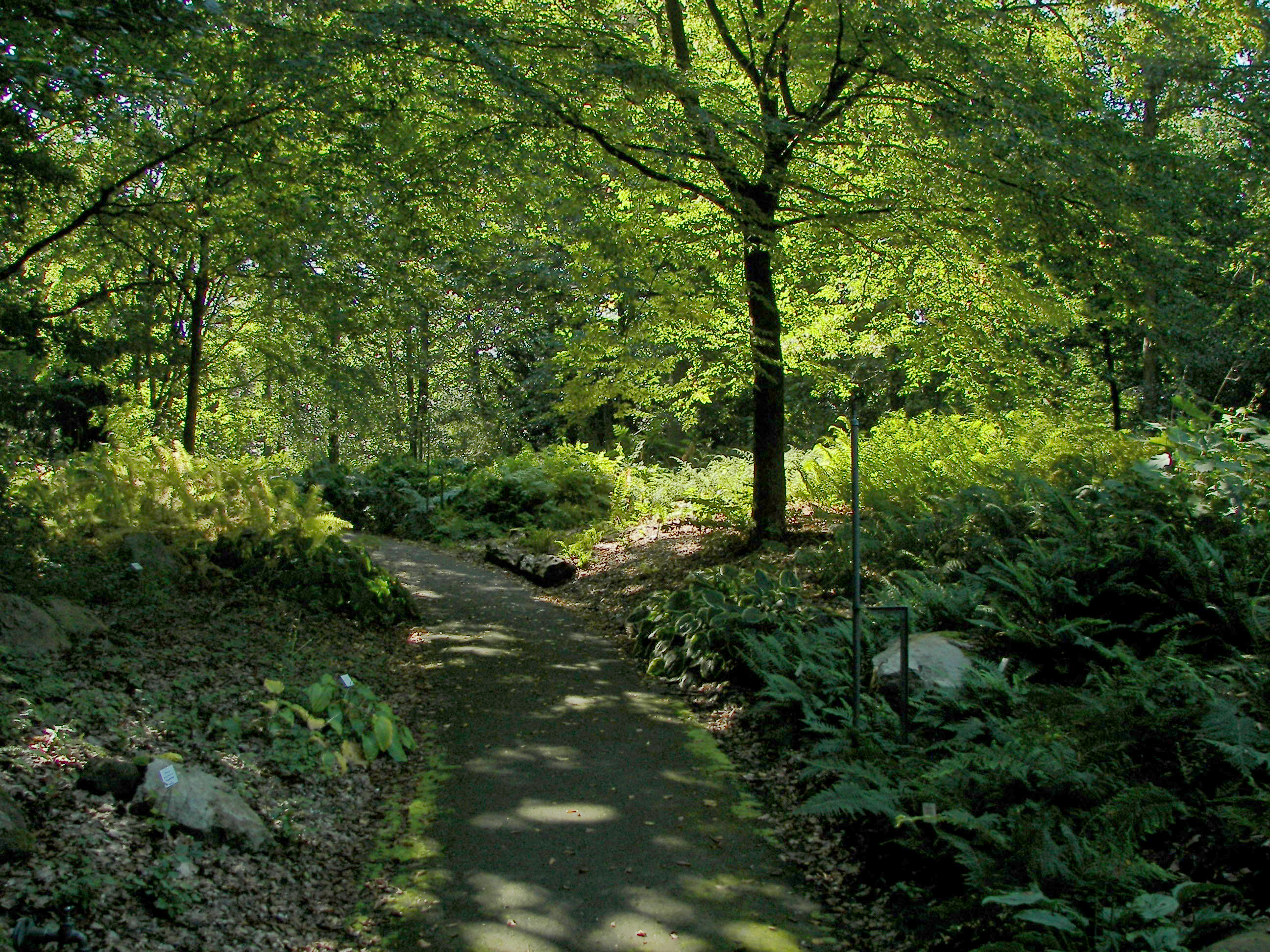 Datei:neuer Botanischer Garten - Farnschlucht 001.jpg ? Wikipedia Garten Dezember Wo Was Verbessern
