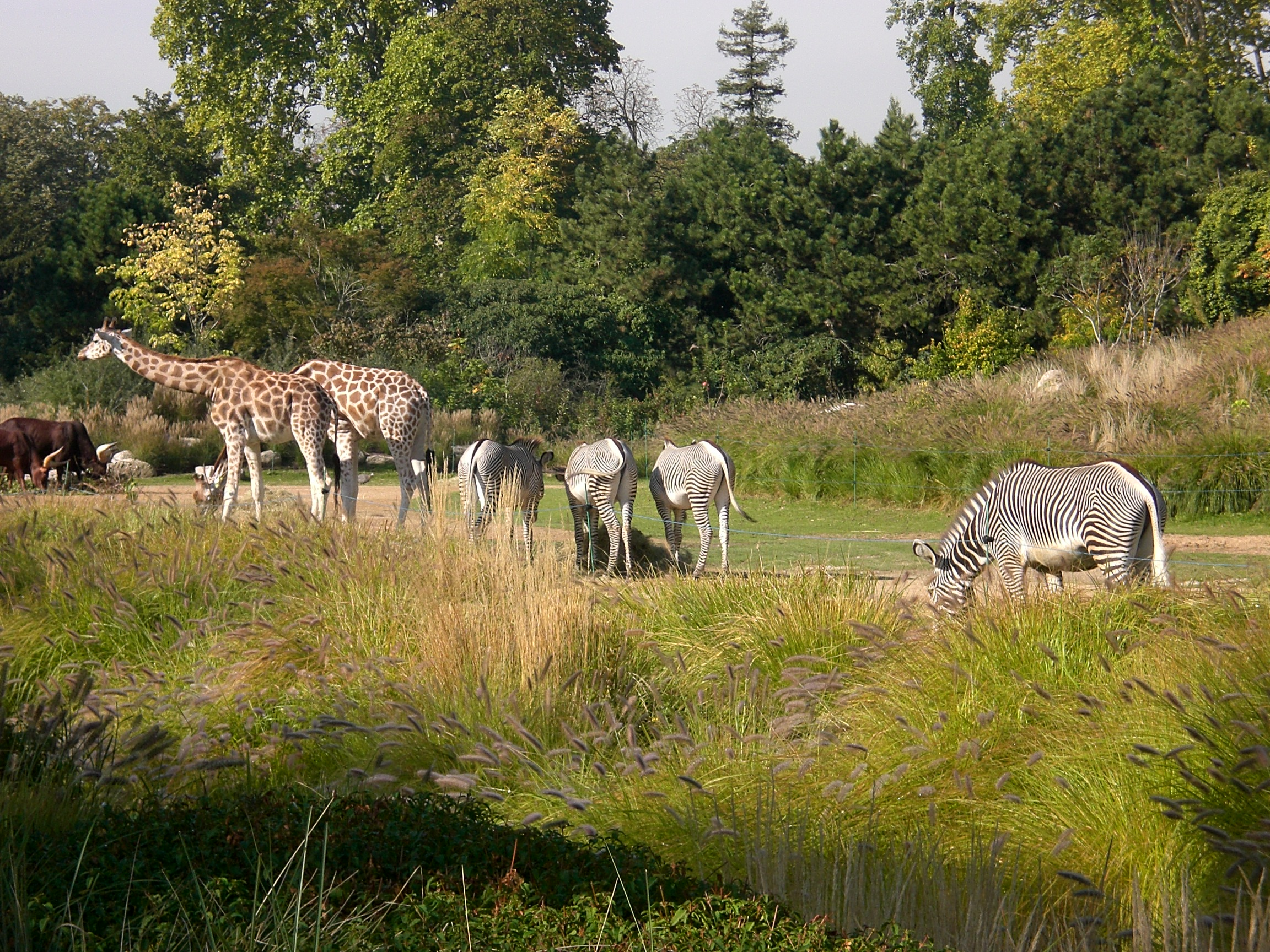 File parc tete or animaux wikimedia commons for Jardin 5 thoiry