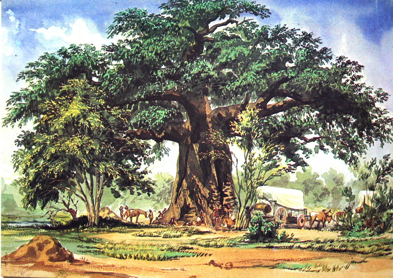 File:Thomas Baines Baobab.jpg - Wikimedia Commons