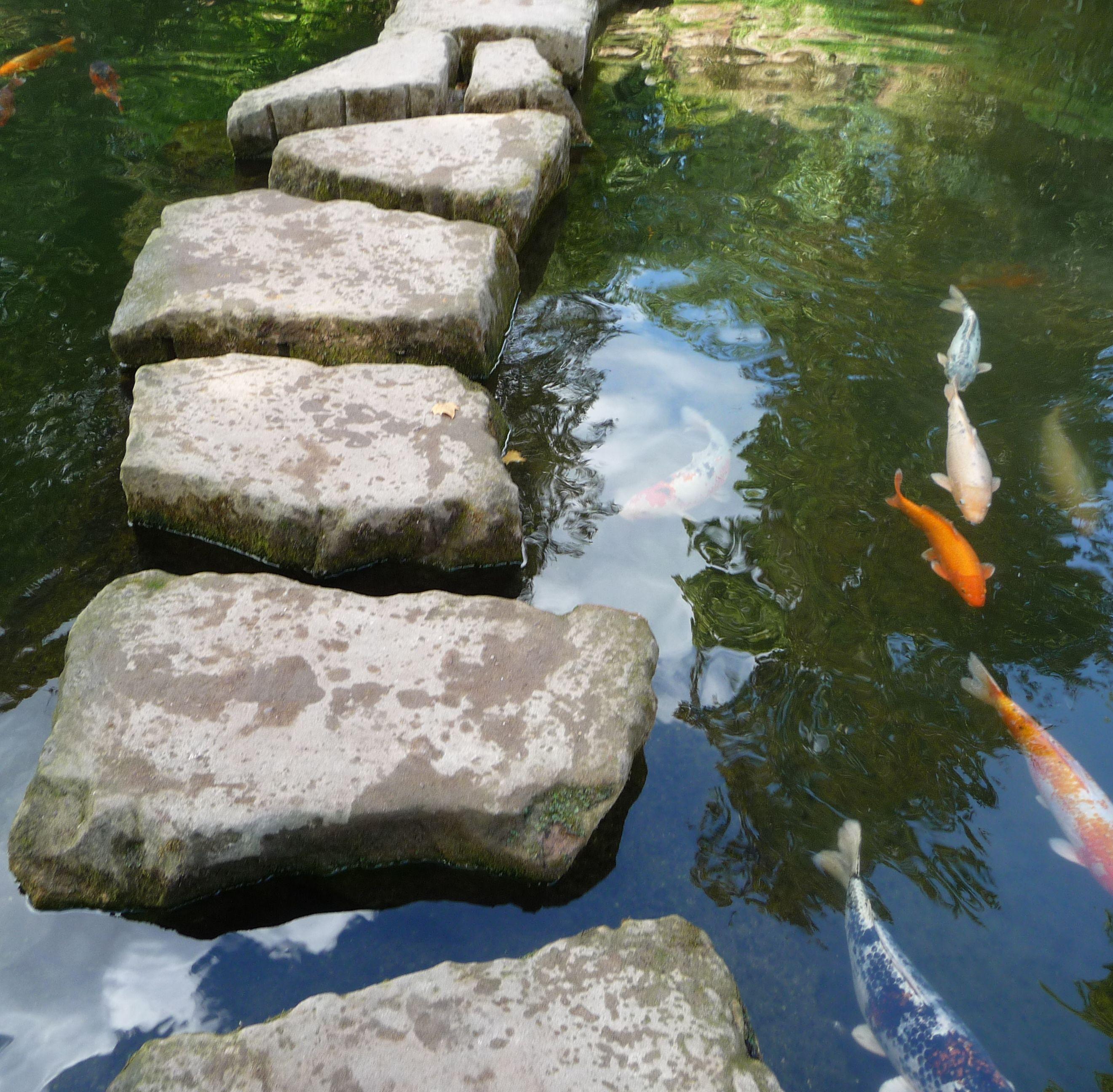 file:trittsteine und übergewichtige koi - panoramio - wikimedia