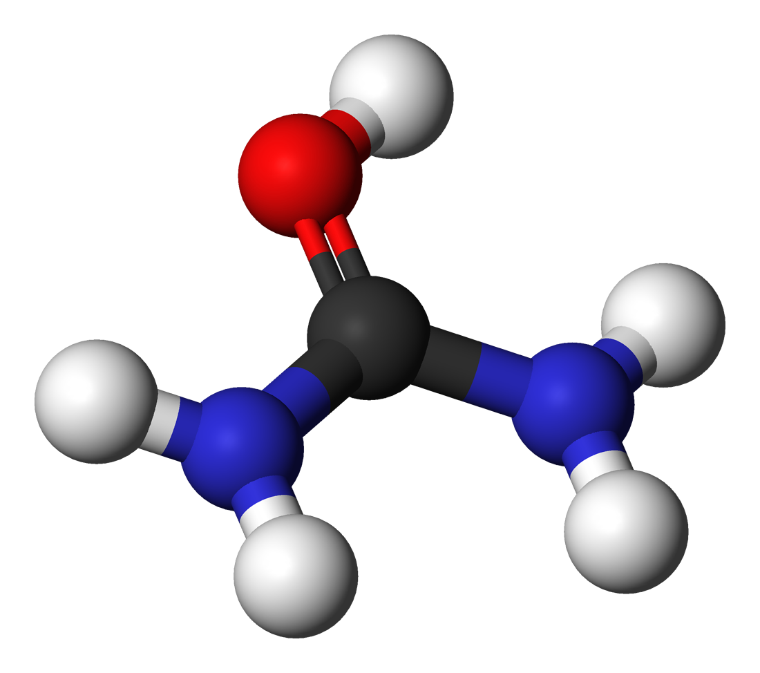 File:Urea-cation-3D-balls.png - Wikimedia Commons
