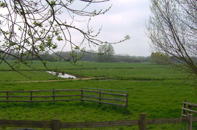 Water meadows by the River Stour at Sudbury - geograph.org.uk - 322366