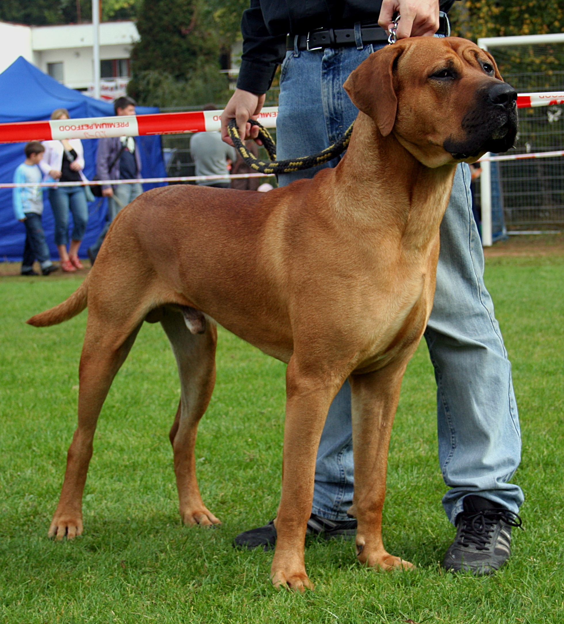 Show Dog Type Moderate Vs Extreme