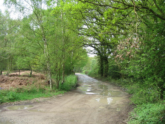 Access track on Bucklebury Common - geograph.org.uk - 791693