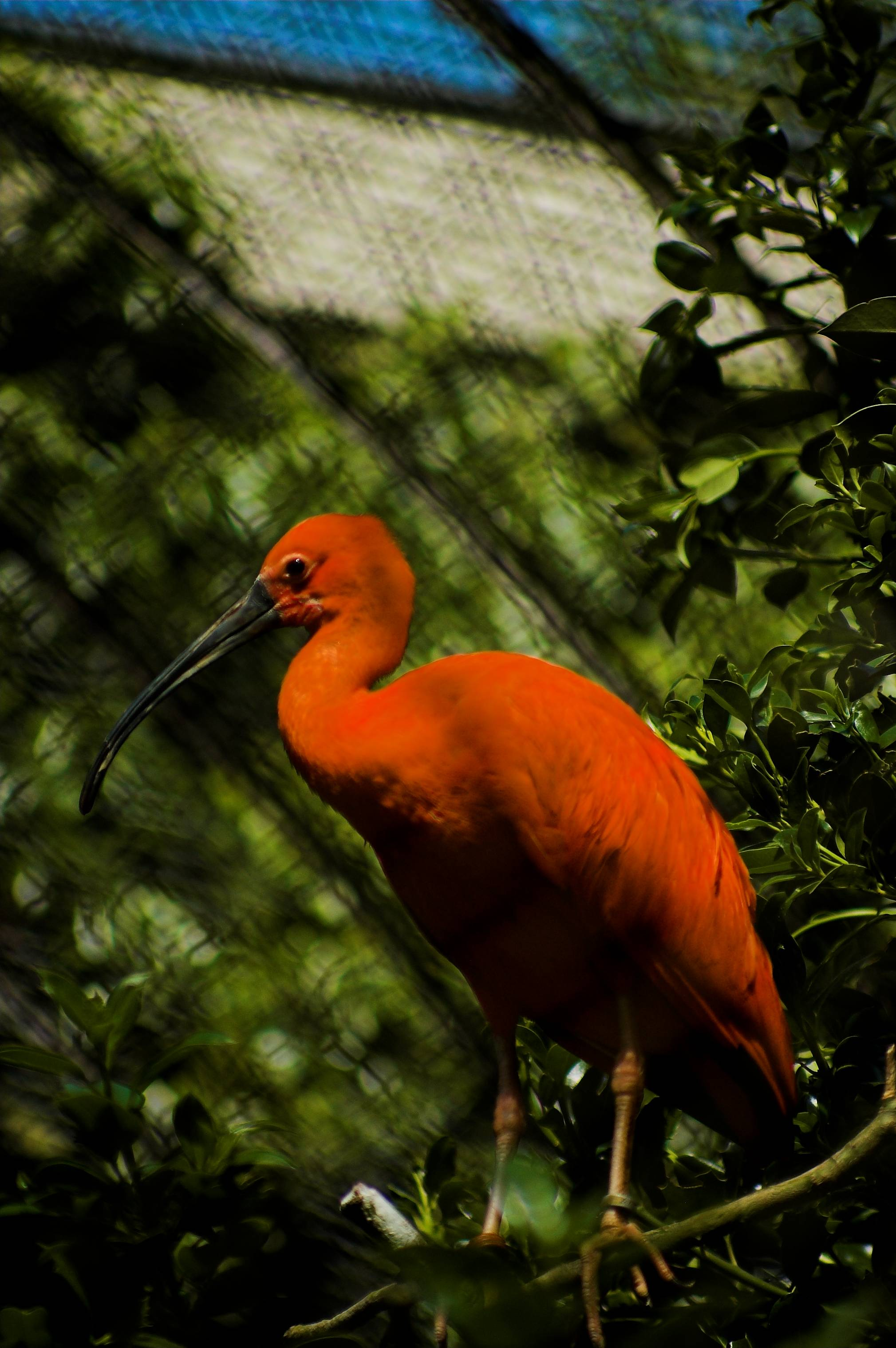 imagery and diction in the scarlet ibis