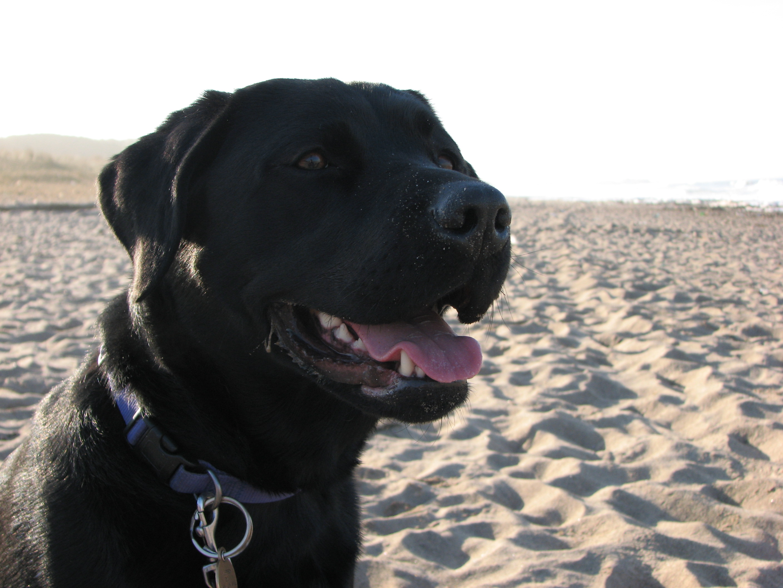 Black Dog Of Wells