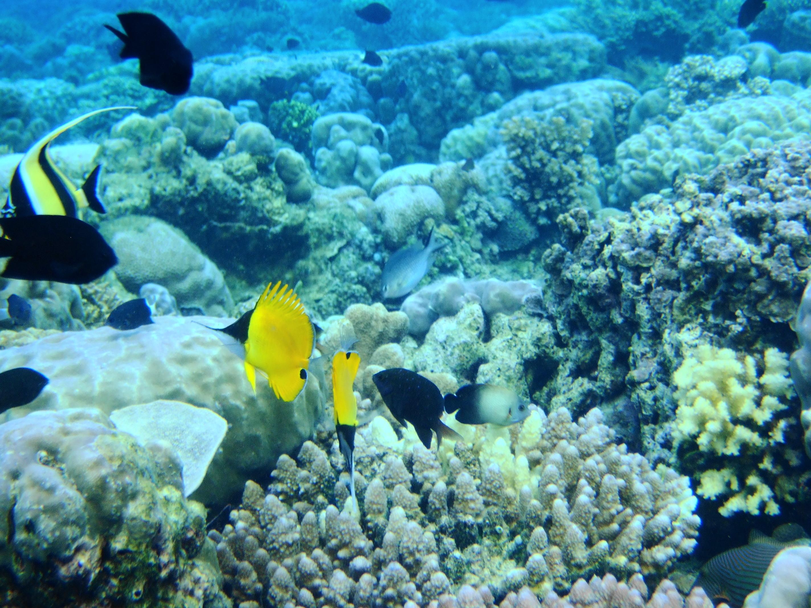 Marine park, Malaysia marine park - Top 10 Things to Do in Kota Kinabalu