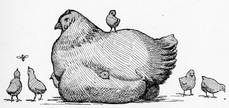 FileDrawing of Hen and Chicksjpg  Wikimedia Commons
