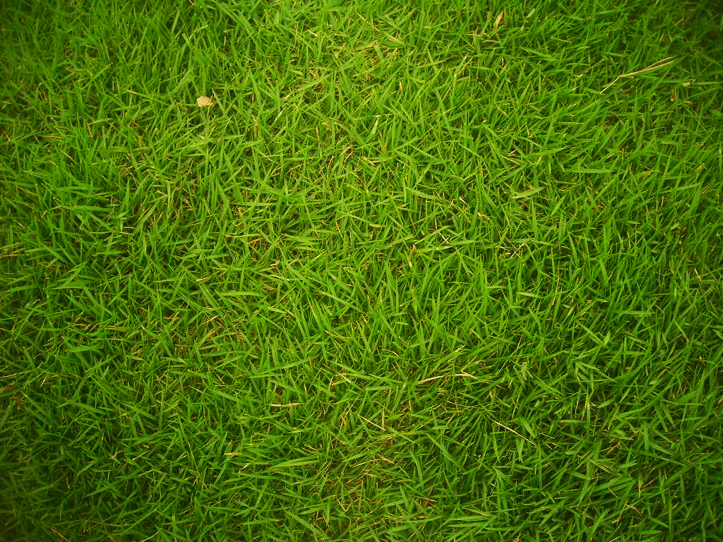 Natural Green Lawn Care Mn Reviews