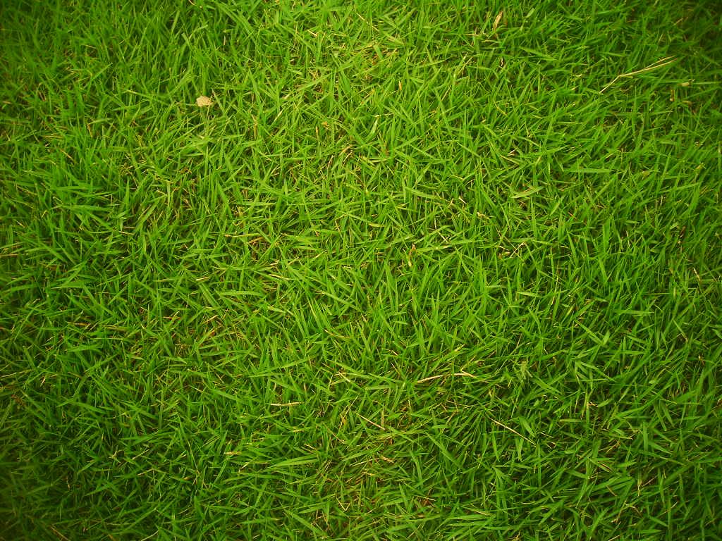 File Grass 01 Wikimedia mons