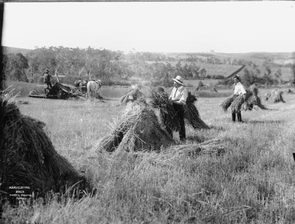 File:Harvest... Harvesting Wikipedia